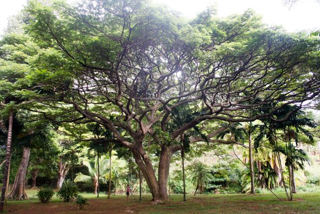National-Tropical-Botanical-Garden-NTBG-Kauai-ryanbenoitphoto-thehorticult-RMB_5294