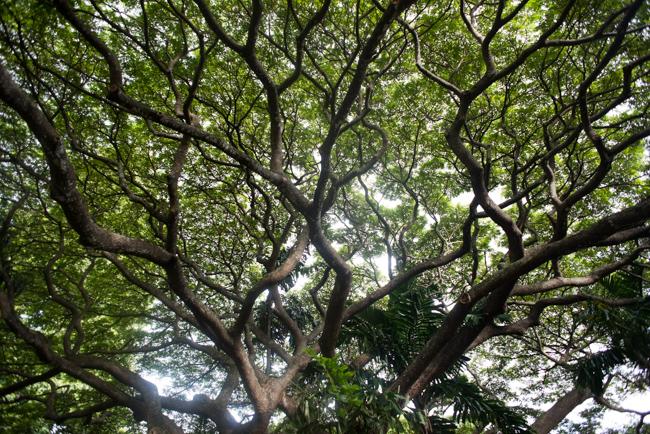 National-Tropical-Botanical-Garden-NTBG-Kauai-ryanbenoitphoto-thehorticult-RMB_5298