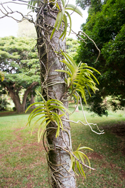Talking \'Canoe Plants,\' Native Flowers at the National Tropical ...