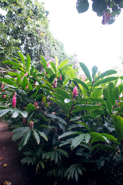 Talking 39 Canoe Plants 39 Native Flowers At The National Tropical Botanical Garden In Kauai The