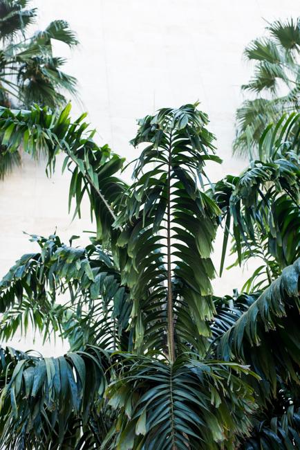 Robert-Irwin-Primal-palm-garden-ryanbenoitphoto-thehorticult-RMB_9331