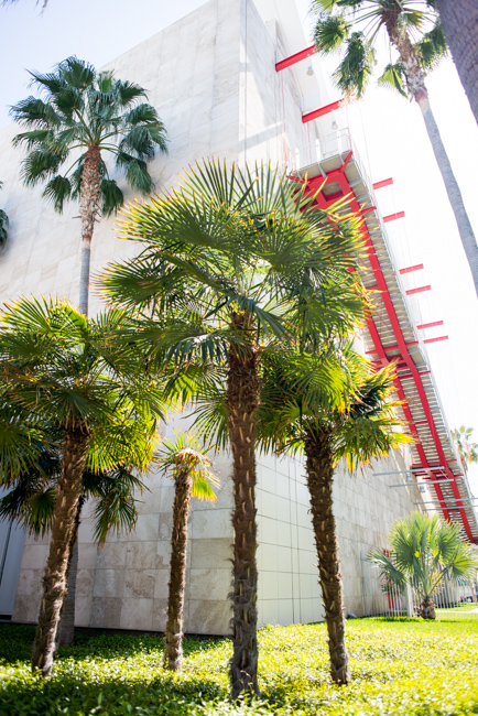 Trachycarpus fortunei or windmill palm. The hairy trunk gives th