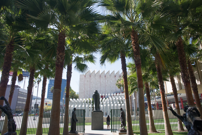 Mexican fan palm (Washintonia robusta), LACMA's Rodin sculpture garden