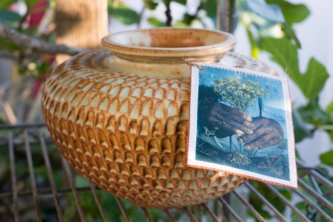cristiana-joe-windansea-garden-tour-ryanbenoitphoto-thehorticult-RMB_0617