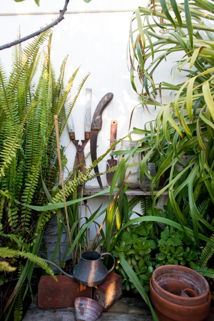 Sword fern, garden tools and staghorn fern.