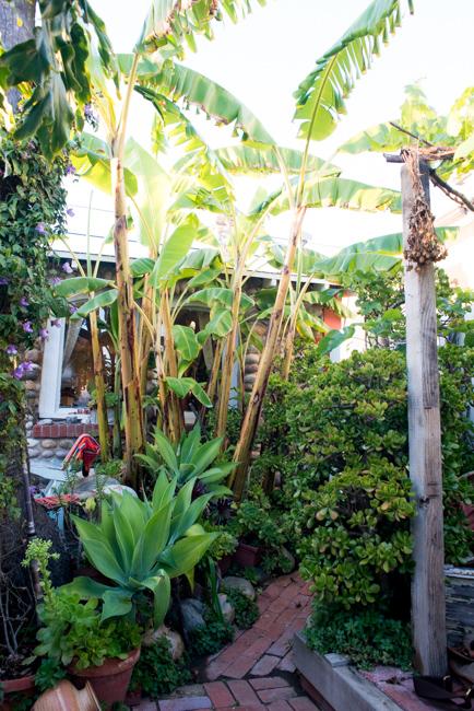 cristiana-joe-windansea-garden-tour-ryanbenoitphoto-thehorticult-RMB_9967