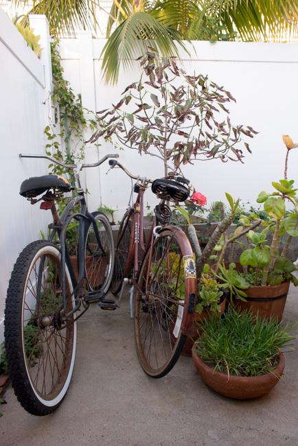 cristiana-joe-windansea-garden-tour-ryanbenoitphoto-thehorticult-RMB_9969