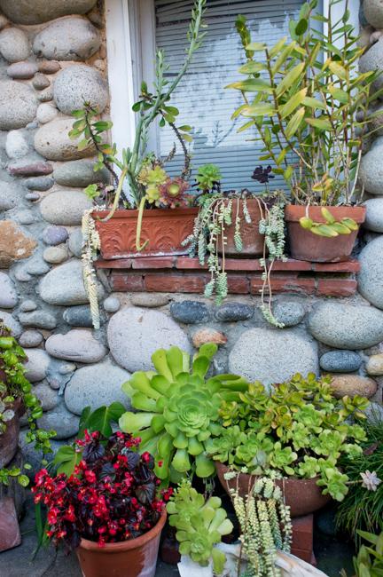 cristiana-joe-windansea-garden-tour-ryanbenoitphoto-thehorticult-RMB_9990