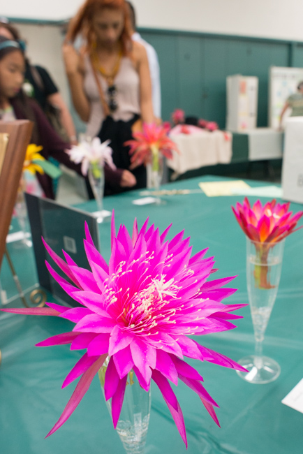 Epiphyllum-blooming-hanging-orchid-cactus-ryanbenoitphoto-thehorticult-RMB_2299