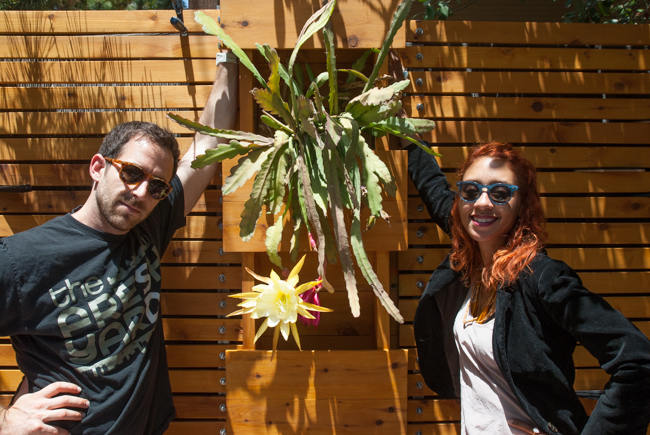 Epiphyllum-blooming-hanging-orchid-cactus-ryanbenoitphoto-thehorticult-_RMB0905