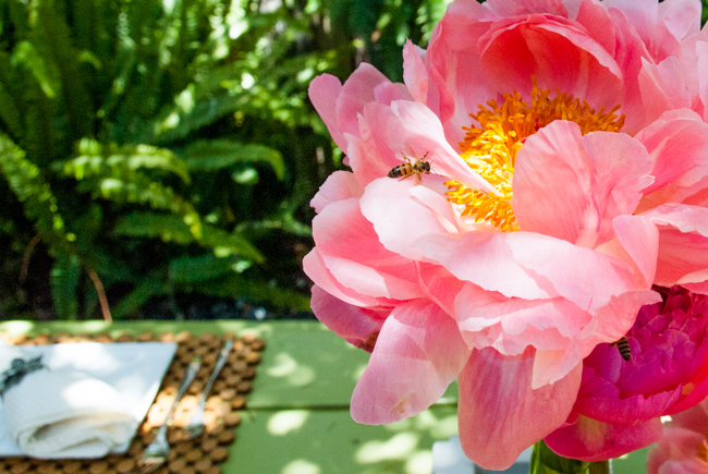 bees and peonies