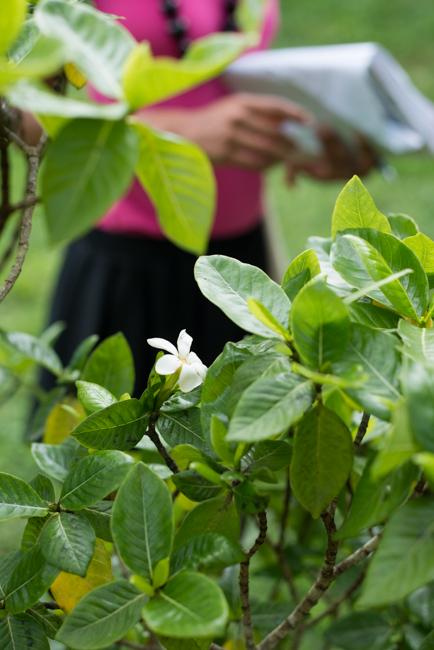 National-Tropical-Botanical-Garden-NTBG-Kauai-ryanbenoitphoto-thehorticult-RMB_5232