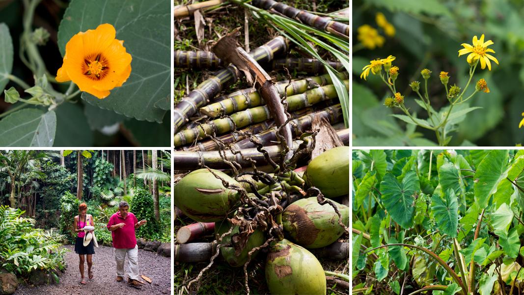 Talking U0027Canoe Plants,u0027 Native Flowers At The National Tropical Botanical  Garden In Kauai