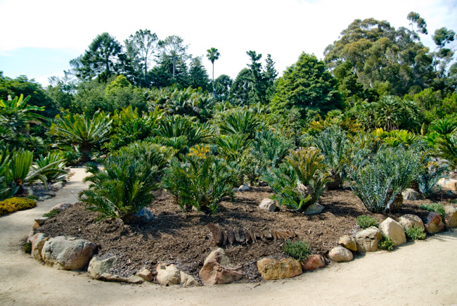 cycad-garden-lotusland-ganna-walska-DSC_0411-ryanbenoitphoto-for-thehorticult