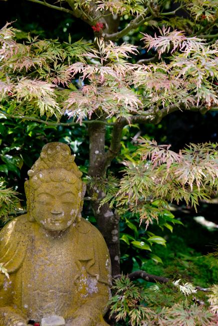Buddha statue and Japanese maple.