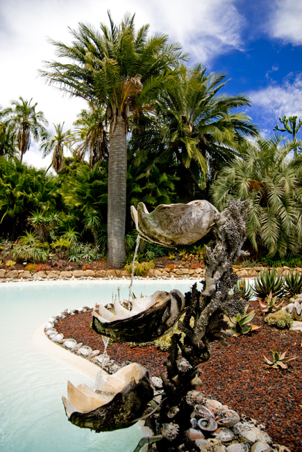 Chilean wine palm and clamshell fountain