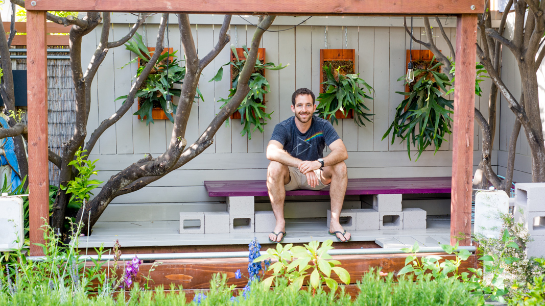 How To Turn Your House Into A Staghorn Fern Party The