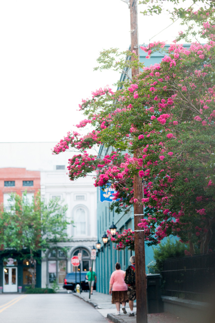 Crepe myrtles of Charleston South Carolina