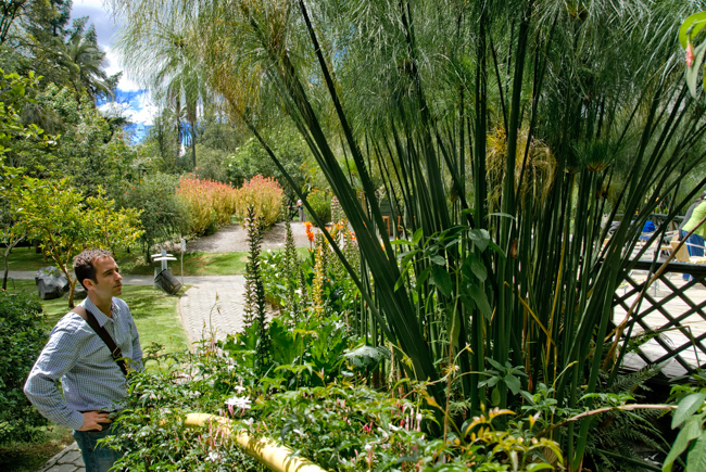 Jardin Botanico:  Stange obsession with Papyrus