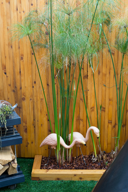 Pink flamingoes and papyrus