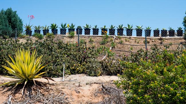 Succulent-Celebration-Waterwise-Botanicals-2014-ryanbenoitphoto-thehorticult-RMB_3044