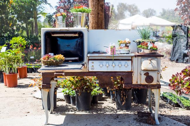 Succulent oven display by Katie Christensen of Ms. Katie's Garde