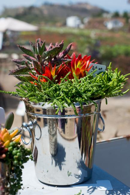 Succulent-Celebration-Waterwise-Botanicals-2014-ryanbenoitphoto-thehorticult-RMB_3190