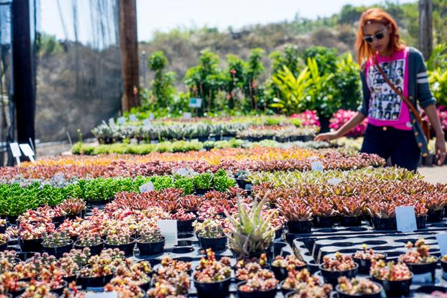 Succulent-Celebration-Waterwise-Botanicals-2014-ryanbenoitphoto-thehorticult-RMB_3194