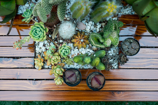 Succulent-Celebration-Waterwise-Botanicals-2014-ryanbenoitphoto-thehorticult-RMB_3371