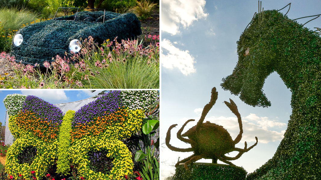 On The Hedge Topiary Artist Joe Kyte Talks Disney Creeping Fig And Driveway Dinosaurs The Horticult