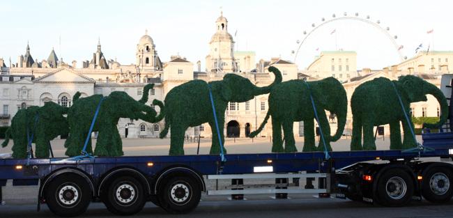 Elephant Family Survivor Tour
