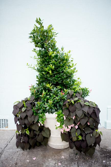planter in Charleston