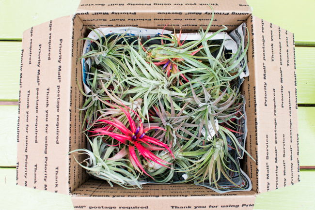 Quick-Invisible-Airplant-Frame-ryanbenoitphoto-thehorticult-RMB_6782