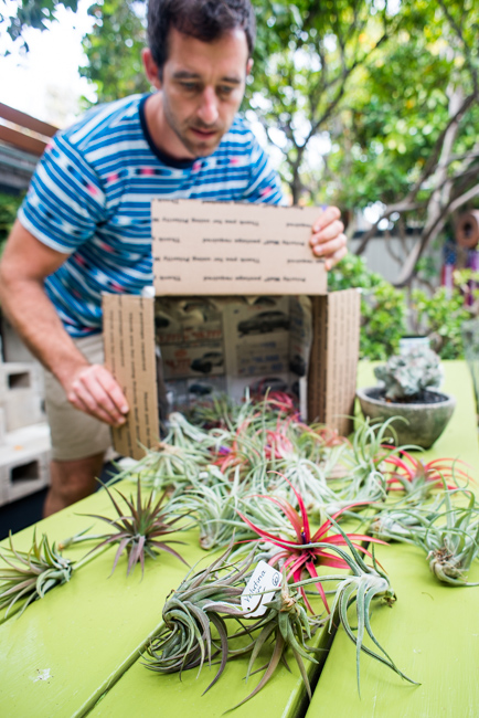 Quick-Invisible-Airplant-Frame-ryanbenoitphoto-thehorticult-RMB_6791