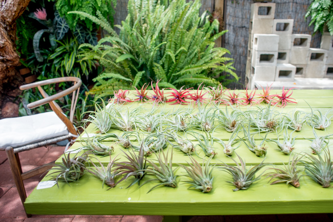 Quick-Invisible-Airplant-Frame-ryanbenoitphoto-thehorticult-RMB_6803