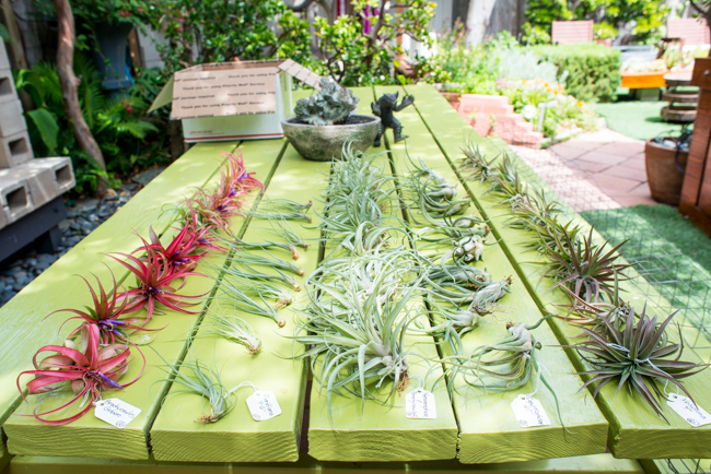 Quick-Invisible-Airplant-Frame-ryanbenoitphoto-thehorticult-RMB_6804
