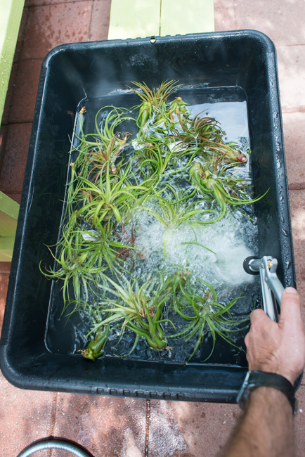 Quick-Invisible-Airplant-Frame-ryanbenoitphoto-thehorticult-RMB_6814