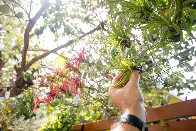Quick-Invisible-Airplant-Frame-ryanbenoitphoto-thehorticult-RMB_6842