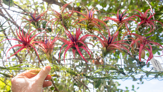 Quick-Invisible-Airplant-Frame-ryanbenoitphoto-thehorticult-RMB_6843