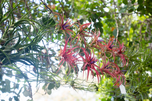 Quick-Invisible-Airplant-Frame-ryanbenoitphoto-thehorticult-RMB_6848