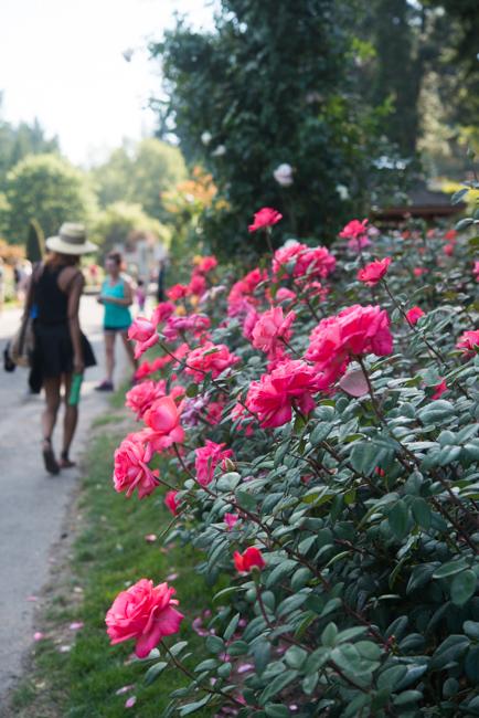 International Rose Test Garden in Portland, Oregon.