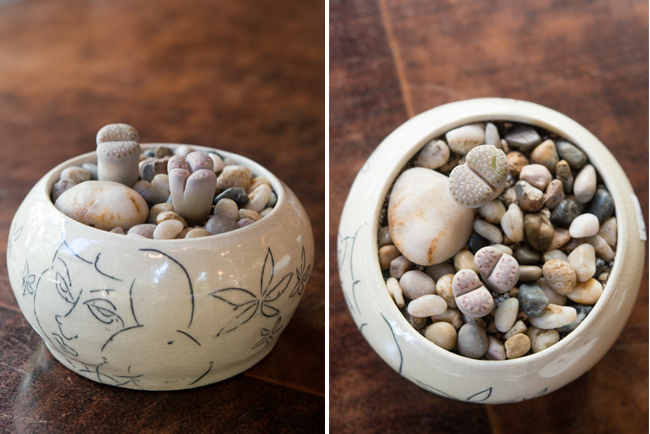 Lithops or living stone.