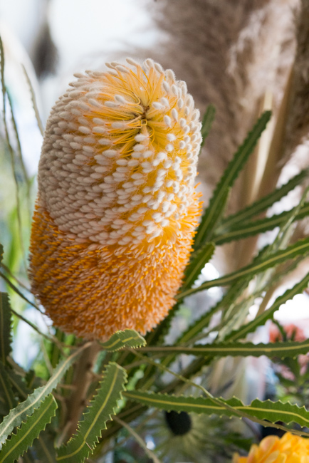 A protea flower at Twig & Twine in East Hollywood