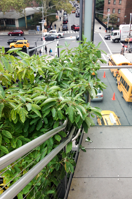 High-Line-New-York-City-Fall-2014-The-Horticult-Chantal-Gordon-Photo-thehorticult-2014-10-02 15.58.58