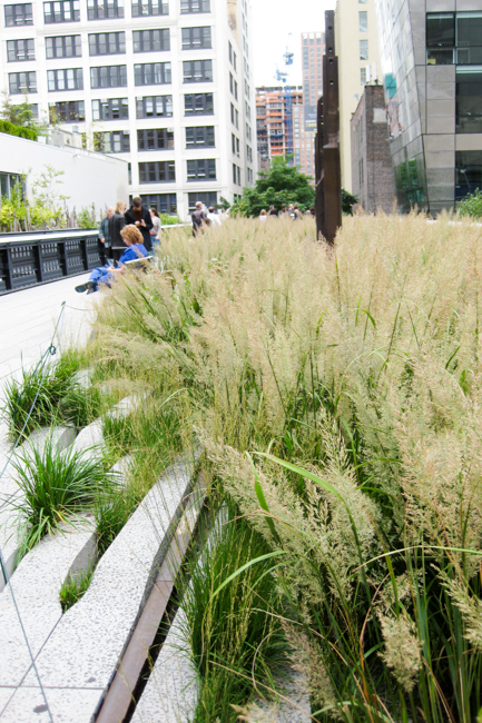 Calamagrostis brachytricha or Korean feather reed grass