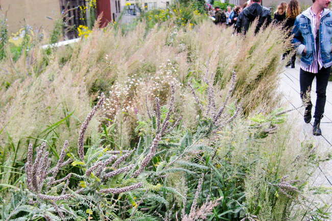 High-Line-New-York-City-Fall-2014-The-Horticult-Chantal-Gordon-Photo-thehorticult-IMG_3784