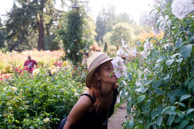 Lagerfeld Grandiflora. International Rose Test Garden in Portland, OR.