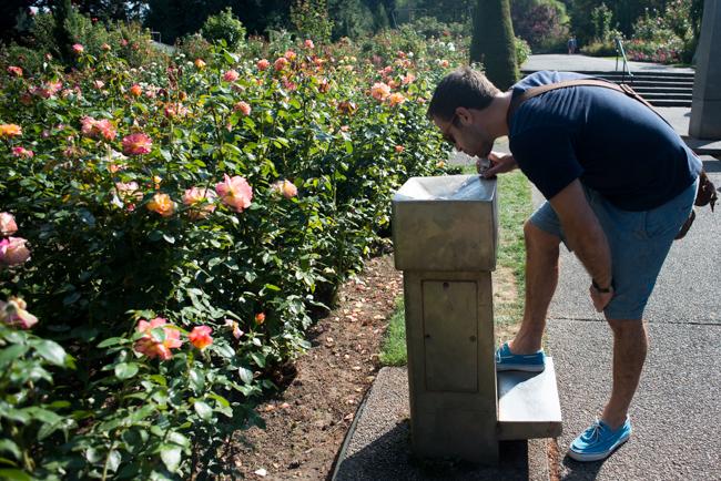 International Rose Test Garden in Portland, OR.