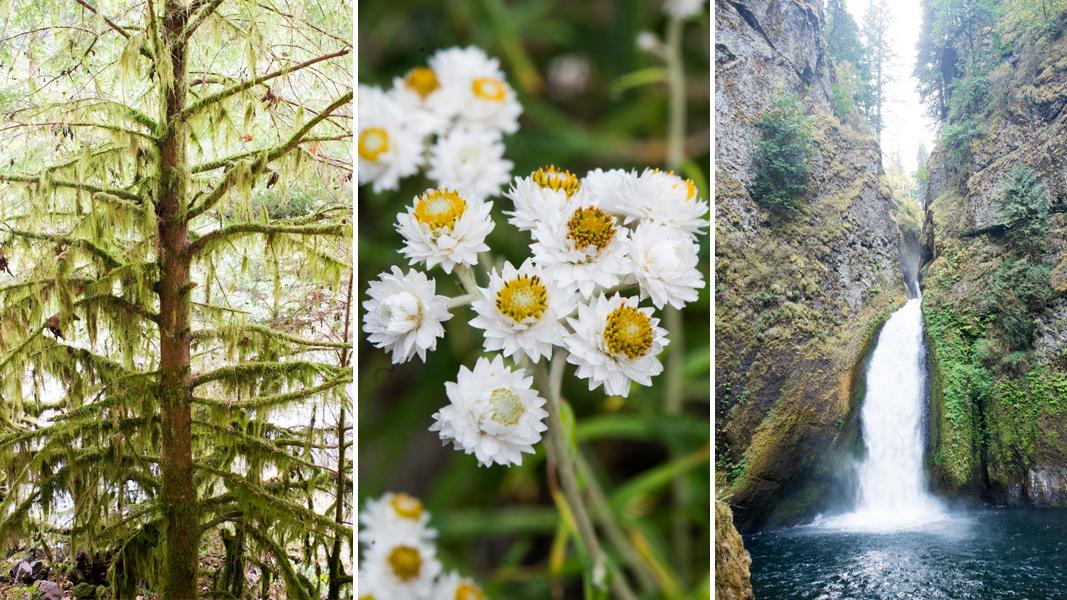 Wahclella-Falls-Hike-The-Horticult