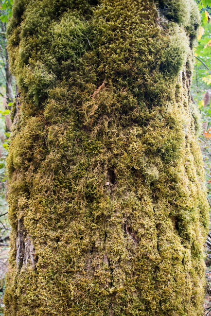 Wahclella-Falls-Portland-Fall-2014-The-Horticult-ryanbenoitphoto-thehorticult-RMB_0476